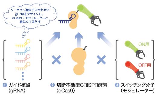 modalis-crispr-gndm2